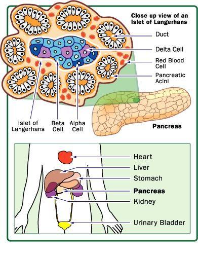 How Diabetes Works