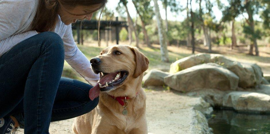 How Can I Limit My Dog's Chances Of Getting Diabetes?