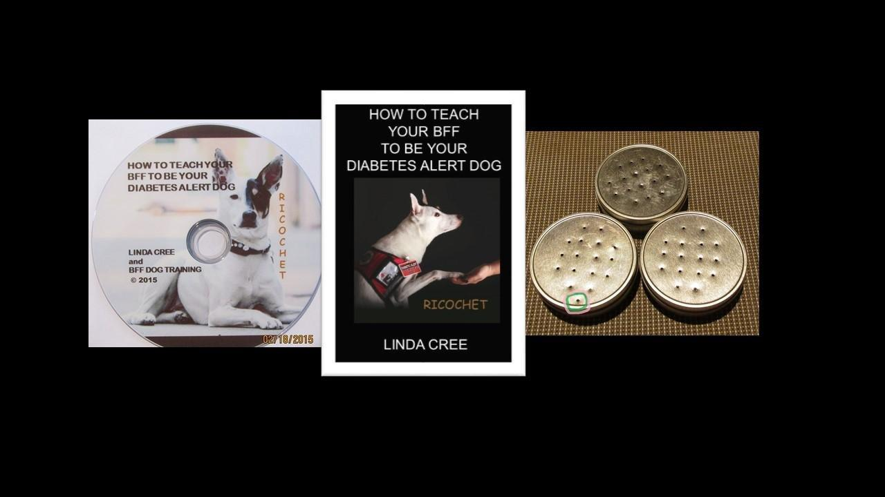 How To Train A Diabetes Service Dog At Home