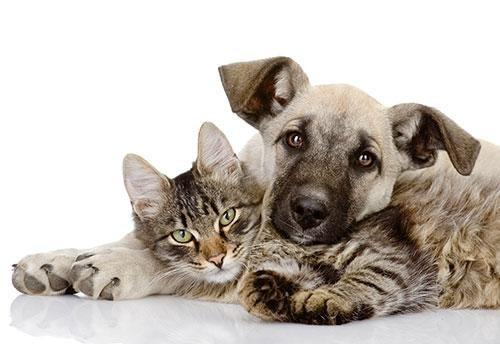 How Do You Treat Diabetes In Dogs?