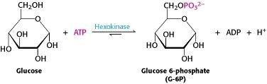 Glucose To Fructose Transformation