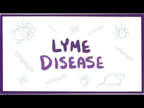 Connection Between Lyme Disease And Diabetes