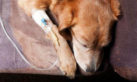 What Is Ketoacidosis In Dogs