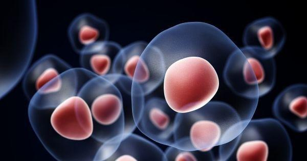 "Scientists Move One Step Closer To ""Curing"" Diabetes Using First-Ever Stem Cell Implant"