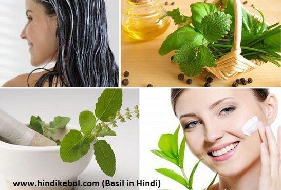 Benefits Of Basil In Hindi & Basil Leaves Uses