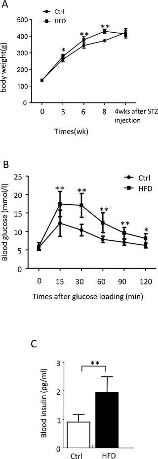 Why Wound Healing Is Delayed In Diabetes Mellitus