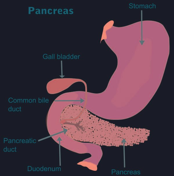 How Diabetes Affects The Pancreas