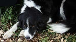 Can My Dog Survive Dka
