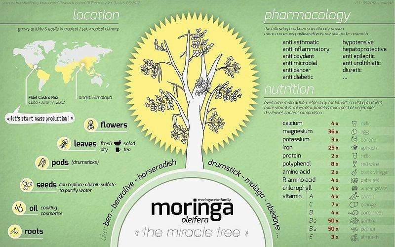 Nutritional Benefits Of Malunggay- Moringa Oleifera Tea Benefits For Diabetes, Diarrhea And Pregnancy