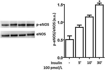 How Does Insulin Signal Cells To Take In Glucose?