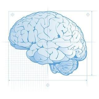 Dear Mark: How Much Glucose Does Your Brain Really Need?