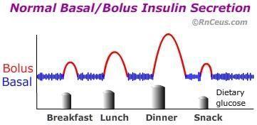 Daily Insulin Secretion By Pancreas