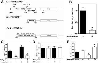 Insulin Gene Expression Is Regulated By Dna Methylation