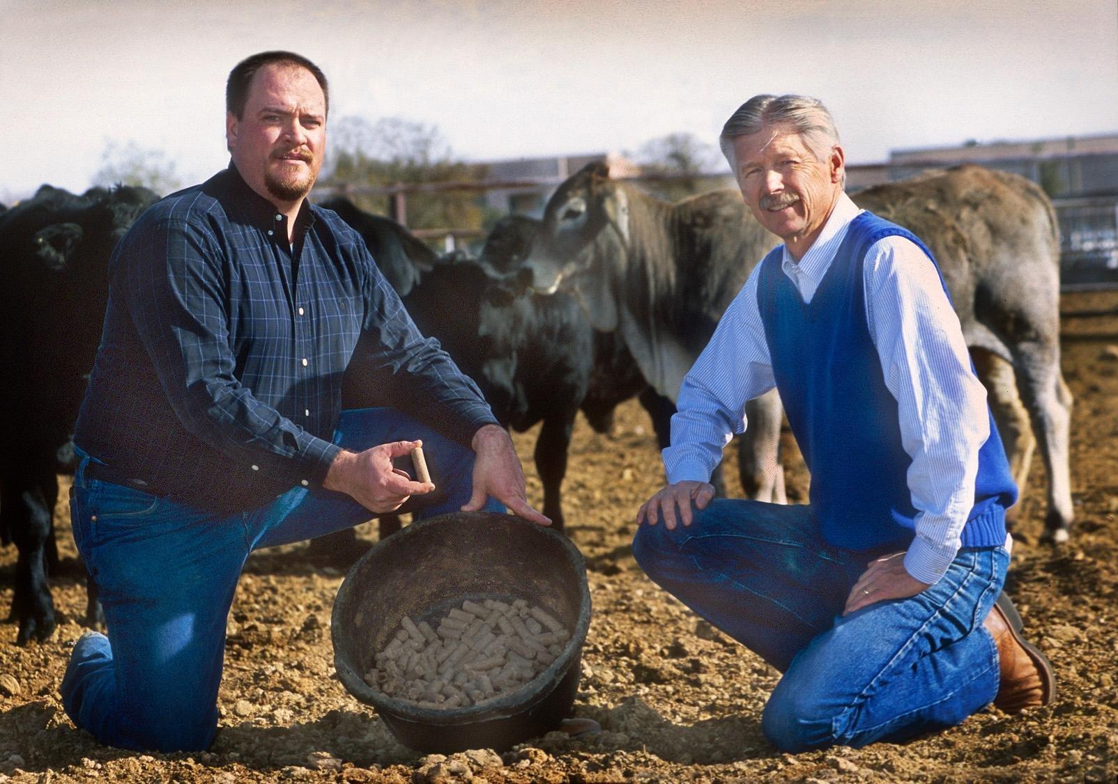Range Cow Weight Loss Linked To Seasonal Diabetes