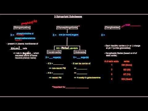 Chapter 05 Part 2 -- Metabolism Of Lipids