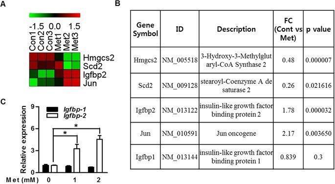 Metformin Stimulates Igfbp-2 Gene Expression Through Pparalpha In Diabetic States