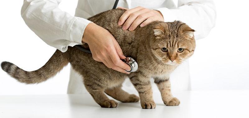 High Blood Pressure In Diabetic Pets