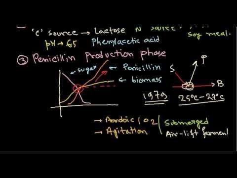 Insulin Production By Fermentation