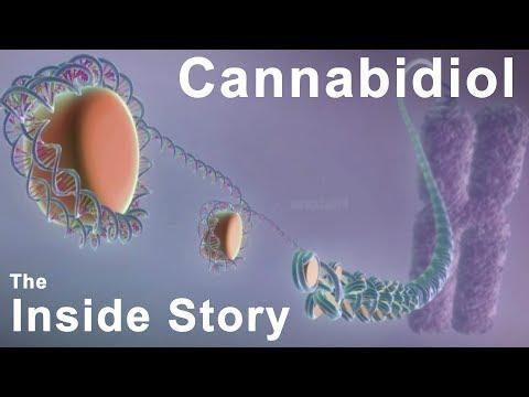 Type Ii Diabetes And Cannabidiol