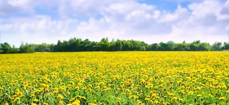 Acme What People With Diabetes Should Know About Allergies