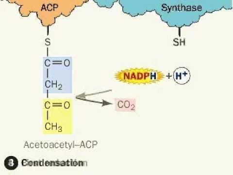 Acetyl-coa - An Overview | Sciencedirect Topics