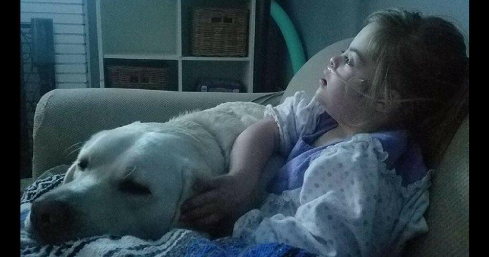 Labrador 5+ Miles Away Saves Life of 4-Year-Old Girl with Down Syndrome and Diabetes