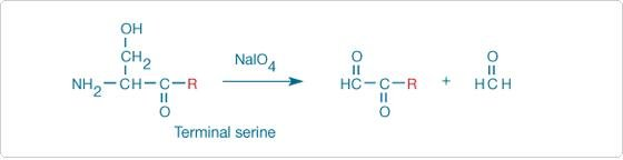 Reagents For Modifying Aldehydes And Ketones—section 3.3