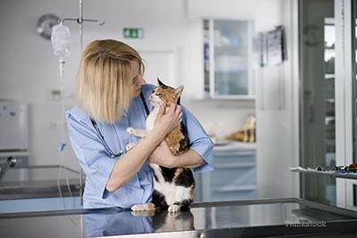 Why Does My Veterinarian Want To Test My Cat For Diabetes?