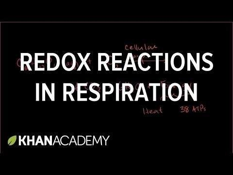 Cellular Respiration As A Series Of Reduction-oxidation Reactions