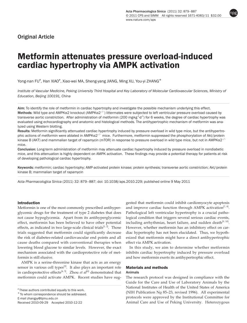 Metformin And Protein Synthesis