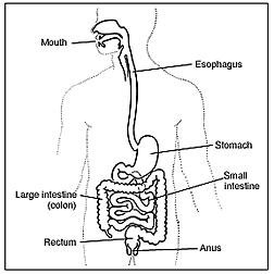 Gastroparesis And Diabetes