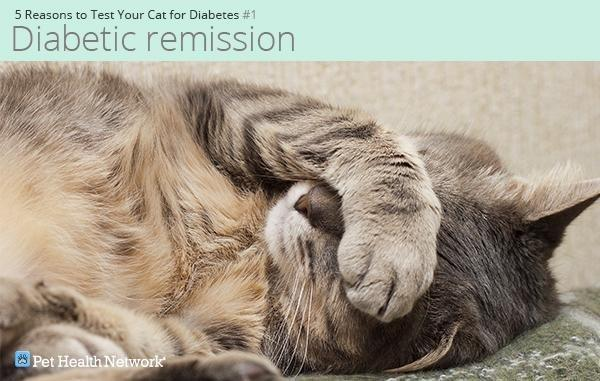 5 Reasons to Test Your Cat for Diabetes