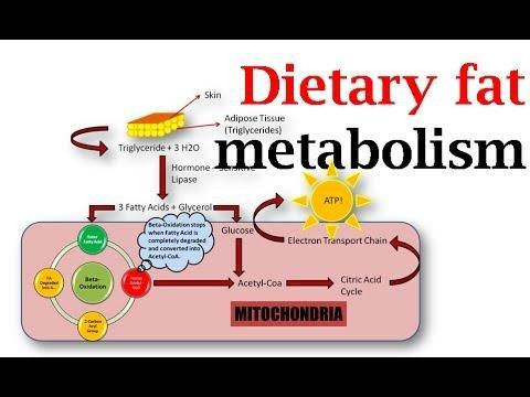 Relationship Of Dietary Fat To Glucose Metabolism - Sciencedirect