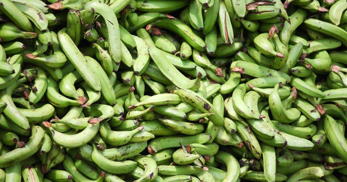Are Plantain Bananas Good For Diabetics?