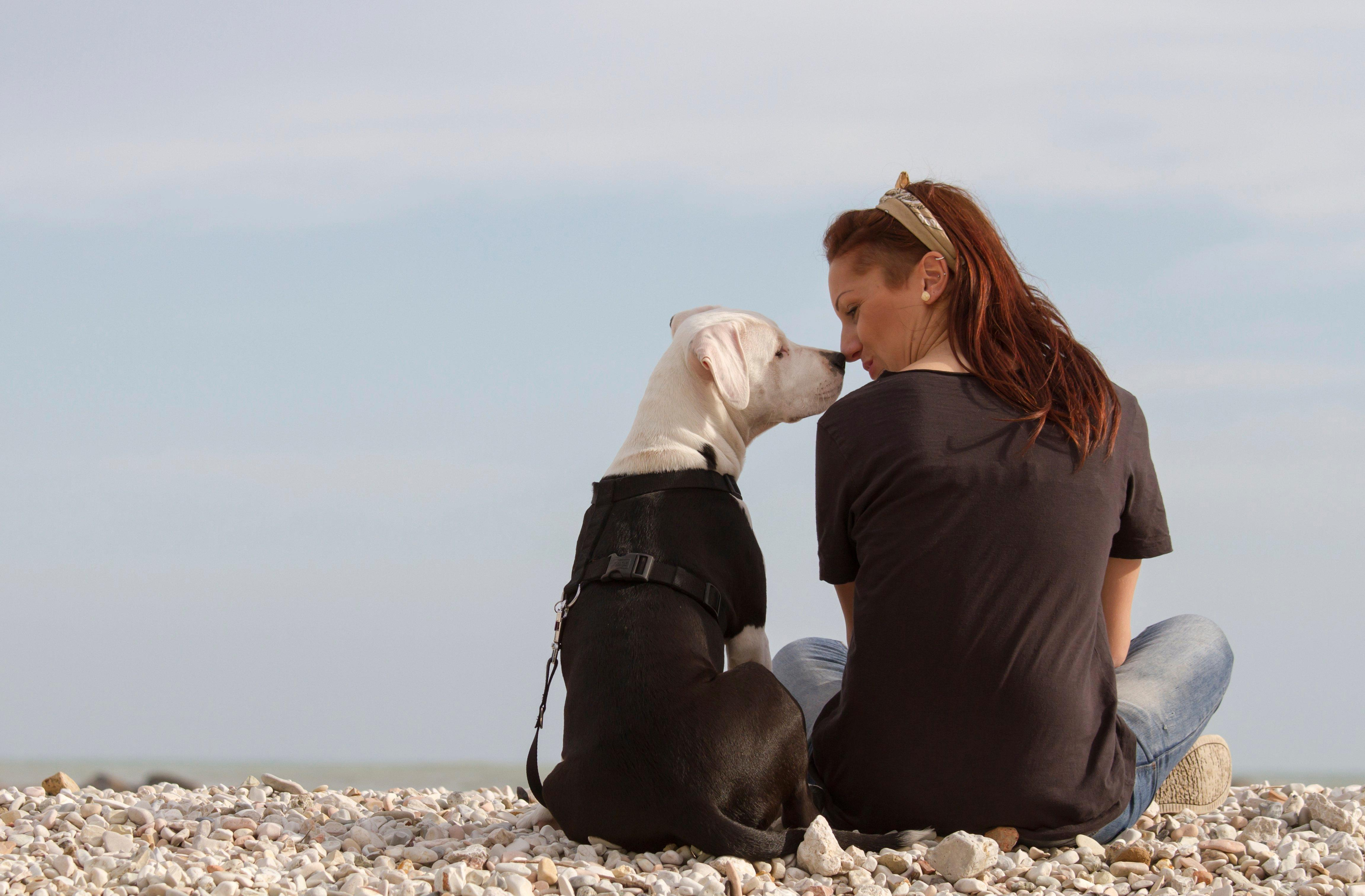 A Step-by-step Guide To Becoming A Service Dog