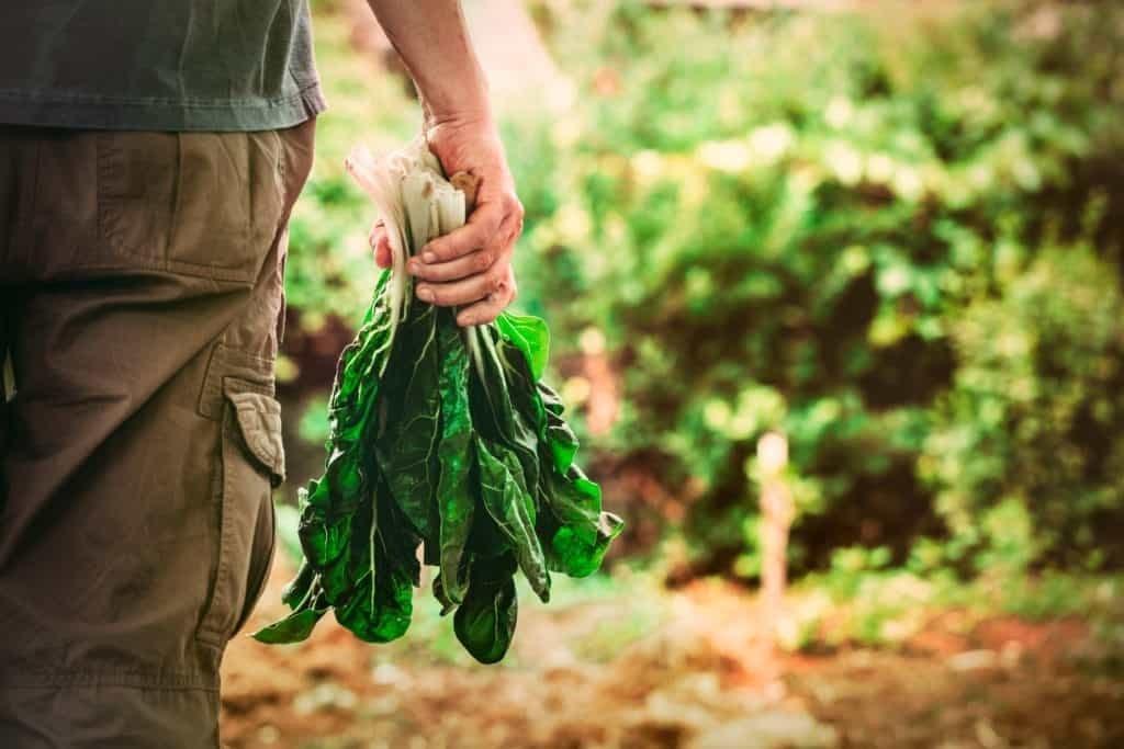 Succeeding with Diabetes on a Vegan Diet