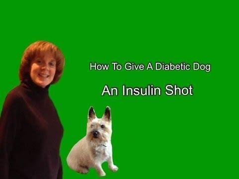 How Much Insulin To Give A Dog