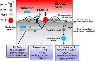 Diabetic Macroangiopathy: Pathogenetic Insights And Novel Therapeutic Approaches With Focus On High Glucose-mediated Vascular Damage - Sciencedirect