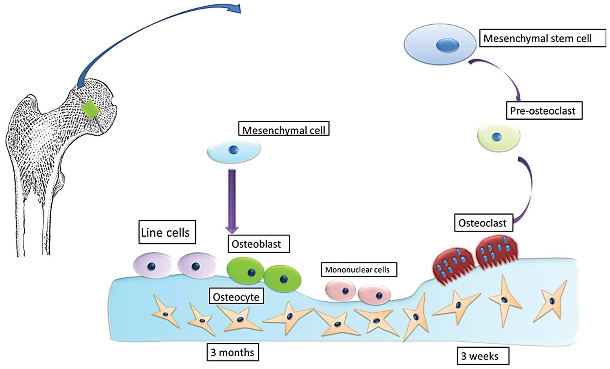 2020 icd 10 code for steroid induced hyperglycemia organon modell kurzgeschichten