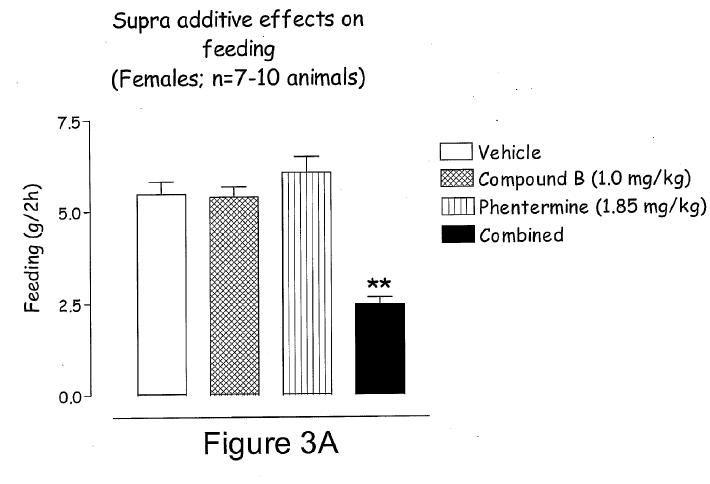 Is Phentermine Safe For Type 1 Diabetics