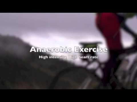 Type 1 Diabetes Exercise Hypoglycemia