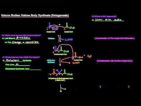 Regulation Of Ketone Body And Coenzyme A