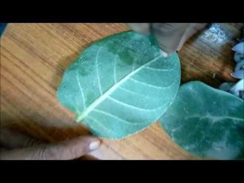 Insulin Leaf Wiki