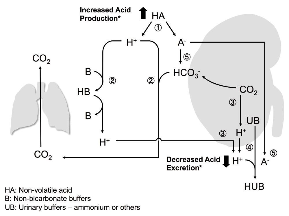Drug-induced Metabolic Acidosis