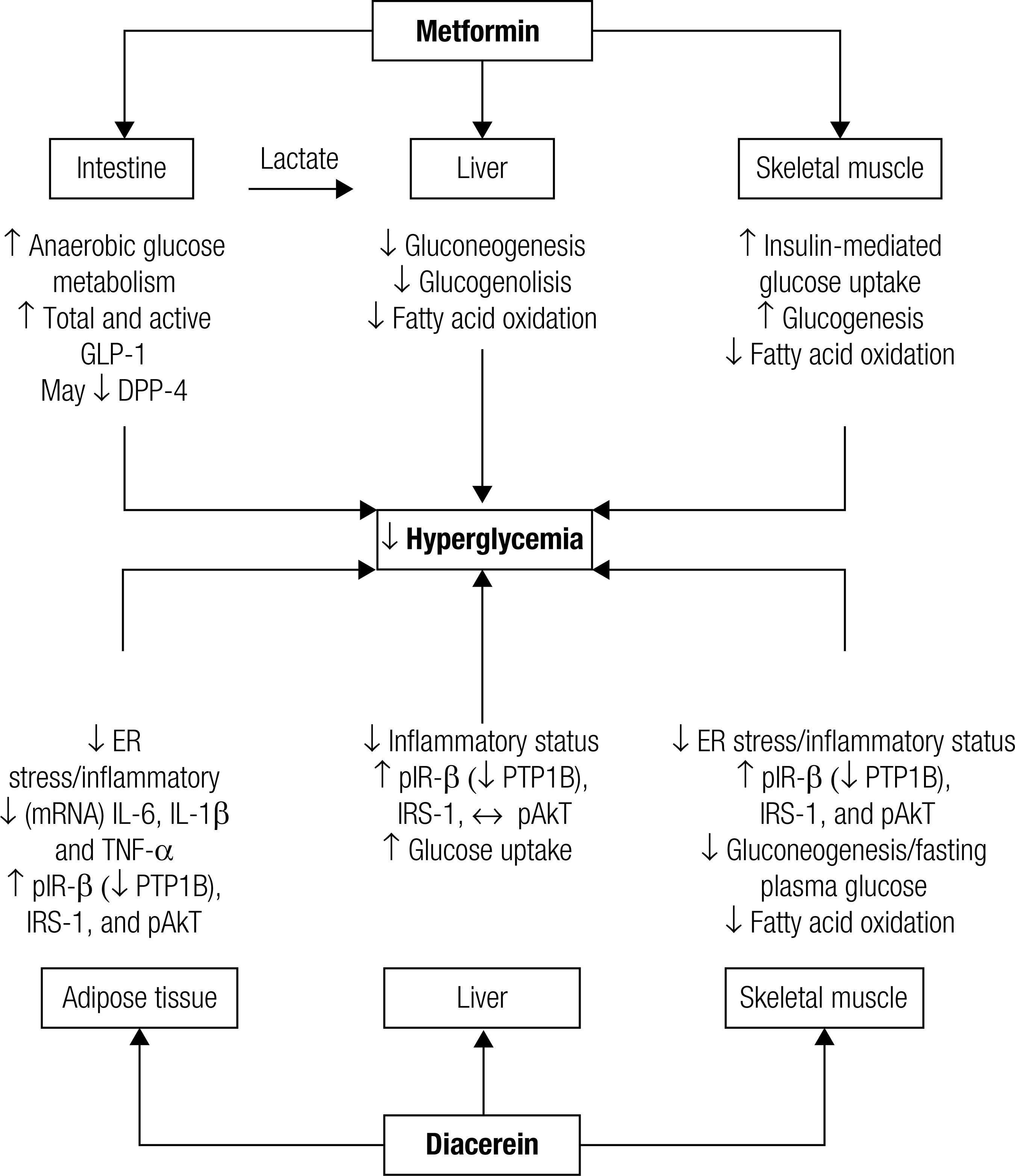 Effect Of Diacerein As An Add-on To Metformin In Patients With Type 2 Diabetes Mellitus And Inadequate Glycemic Control