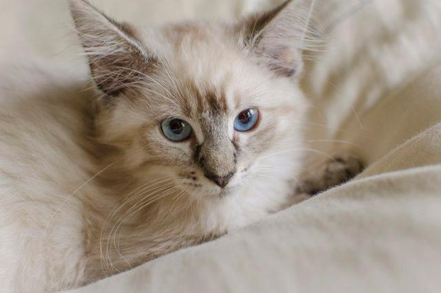 Recommended Canned Food For Diabetic Cats