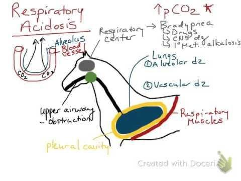 How Does The Body Compensate For Respiratory Acidosis