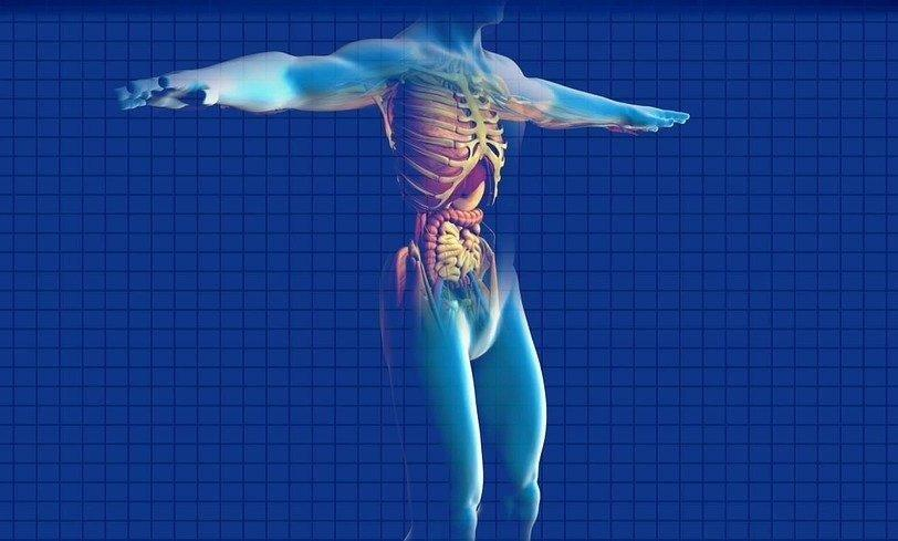 Natural Treatment For Pancreas Problems