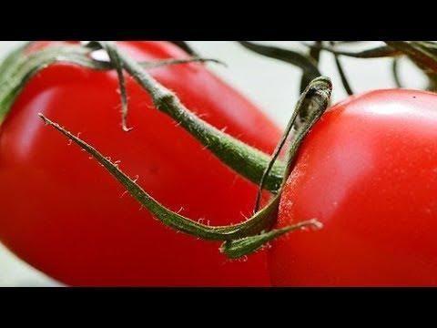 Sugar In Tomatoes Diabetes