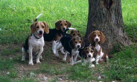 Type 1 Diabetes Cured in Dogs